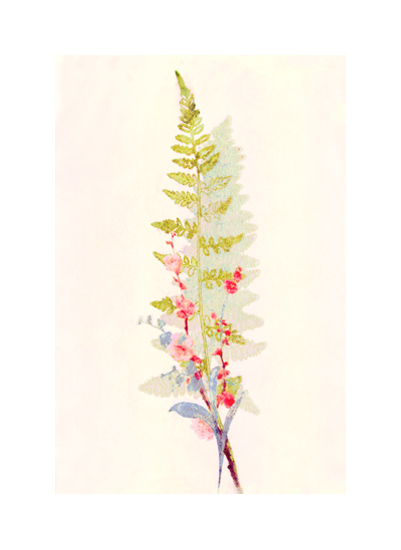 art prints - Spring Fern and Flowers by hadley hutton