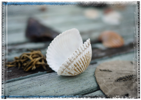 art prints - Vacation Shells by Kevin Kampwerth