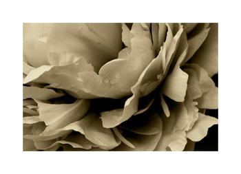 Delightful Blossoms 2