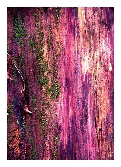 art prints - Magic Rainforest by Kate Terhune