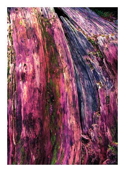 art prints - Washington Wood by Kate Terhune