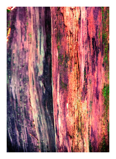 art prints - Washington Perspective by Kate Terhune