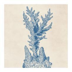 Coral Series 03