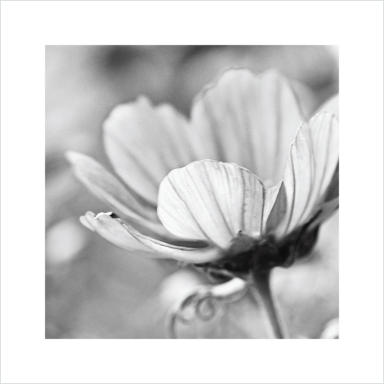 art prints - Flora by Hooray Creative