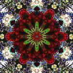Evolve & Awaken by Rachel Mense
