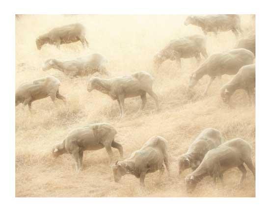 art prints - are ewe there by Neeta Sawhney