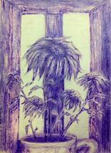 Purple sunflowers by Marta