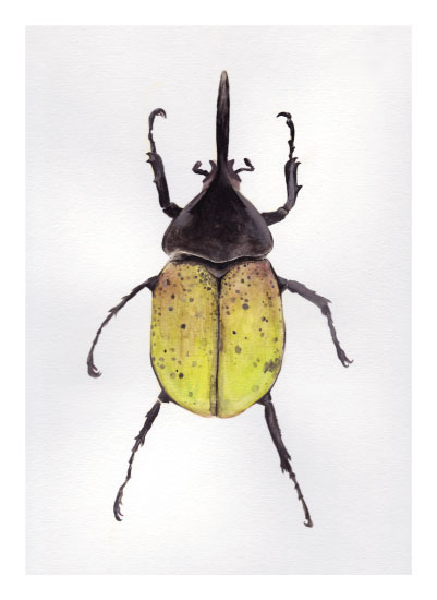 art prints - Hercules Beetle by Milk and Marrow