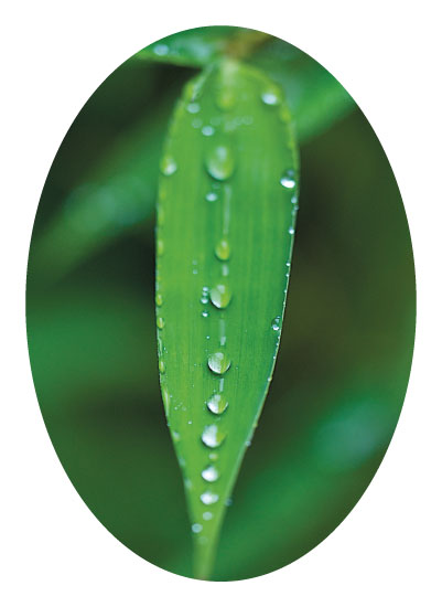 art prints - Droplets on a leaf by Tree Anderson