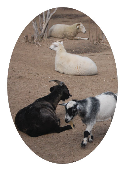 art prints - Livestock Neutrals by LLK