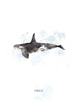 Whale Series 3