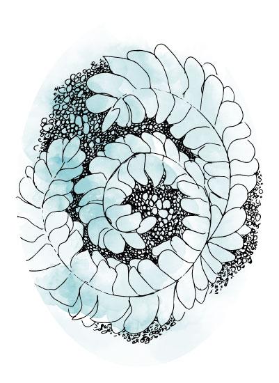 art prints - Water Botanical by Carmelina