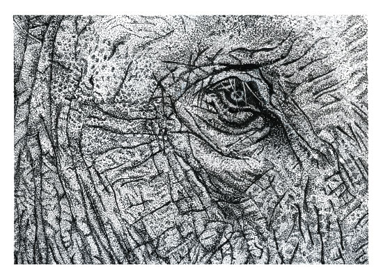 art prints - Elephant Eye by Tree Anderson