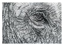 Elephant Eye by Tree Anderson