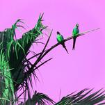 Parrots in Paradise by Jenny Garvin