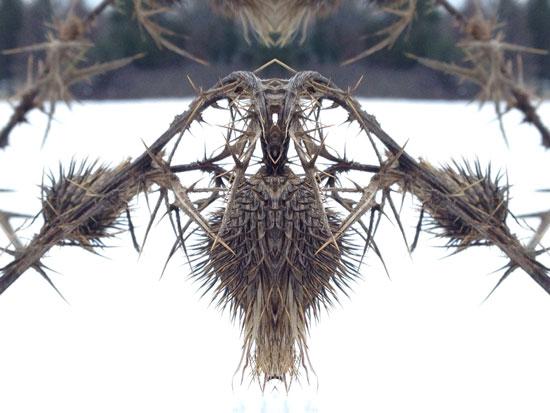 art prints - Snowy spines by Ellen Hampton