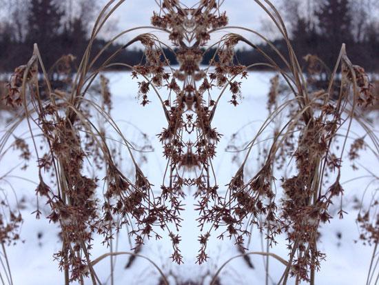art prints - Winter Lake Lace by Ellen Hampton