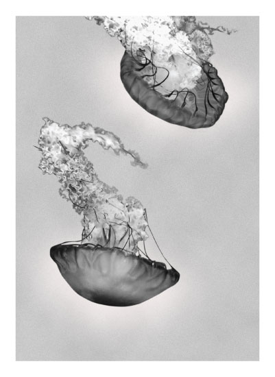 art prints - Jelly by LemonBirch Design