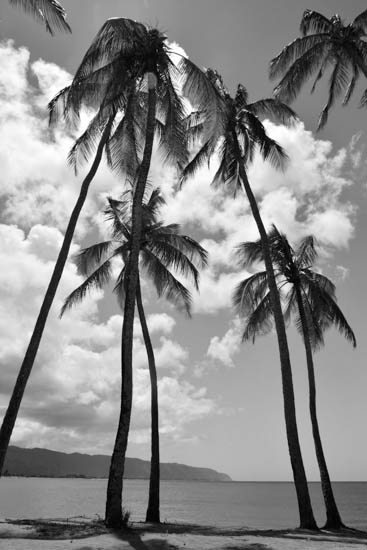 art prints - The Palms by Lonna Coleman