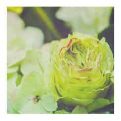 Floral Ruffles