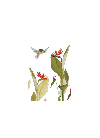 art prints - Bird of Paradise by Eileen Tomson
