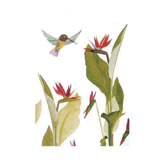 art prints - humming bird and bird of paradise by Eileen Tomson
