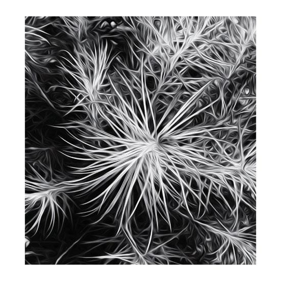 art prints - Anemone by Monica Janes Fine Art