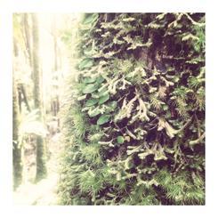 Rainforest xtravaganza 1