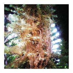 Rainforest xtravaganza 3