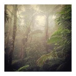 Rainforest xtravaganza 4