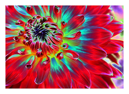 art prints - The Spirit of the Black Dahlia by Color Continuum