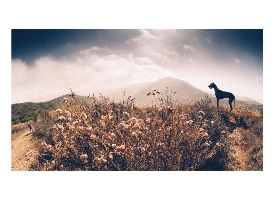 art prints - Dog Day by Kamala Nahas