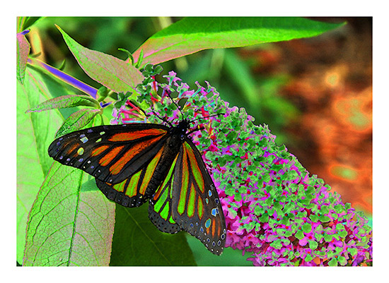 art prints - The Spirit of the Monarch 2 by Color Continuum