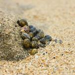 Snails on the Shore by Julie McCarthy