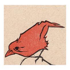 orange is the new bird