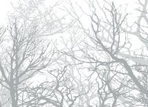 Woodsy Winter Scene by Katrina Lindhorst
