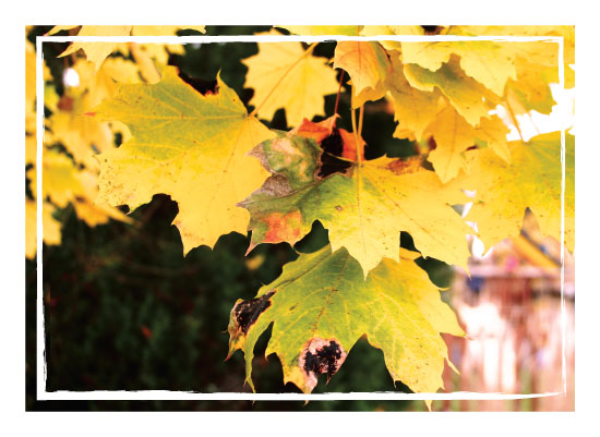 art prints - Golden Leaves by Brynn Eenigenburg