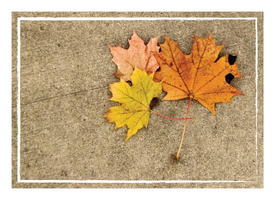 art prints - Three Found Leaves by Brynn Eenigenburg