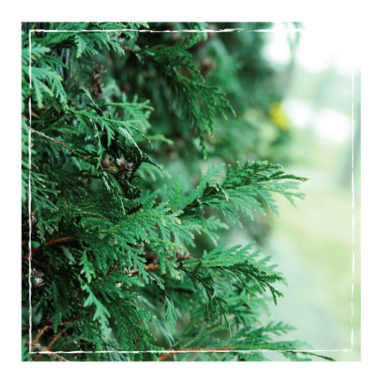 art prints - Pine Branches by Brynn Eenigenburg