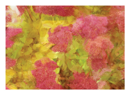 art prints - Clusters Of Pink by Brynn Eenigenburg