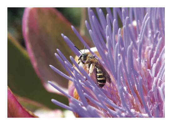 art prints - Honeybee's Harvest by Brendan Lim
