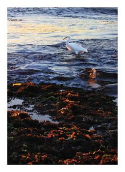 Snowy Egret I
