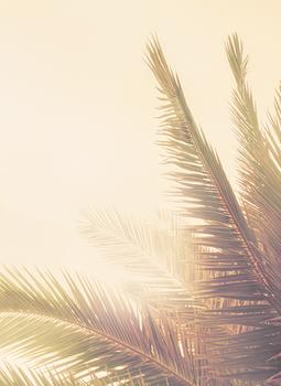 Golden Palm Tree