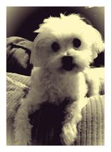 Vintage Puppy by Renae Dominguez