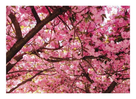 art prints - Pink Oasis by Renae Dominguez