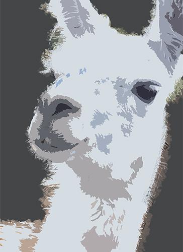 art prints - llama by Ena Chahal