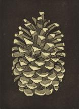 Bethany Beach Pine Cone by Maggie Coyne