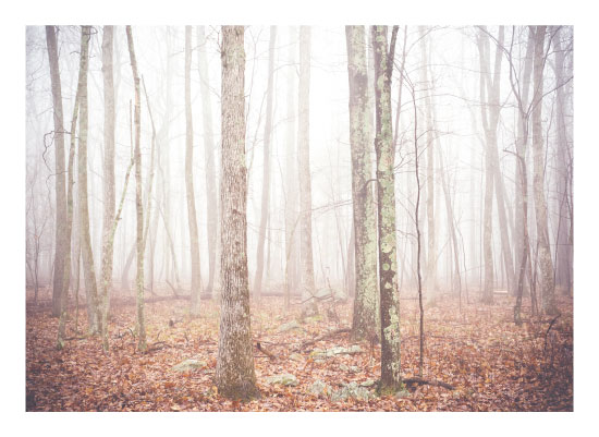 art prints - Foggy Forest by Smile Peace Love