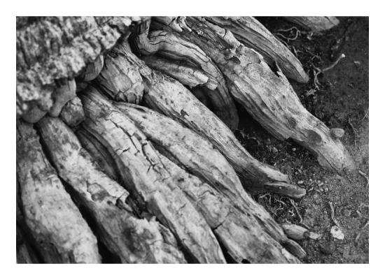 art prints - root's texture by clara catharina