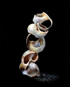 Shellscapes: A Delicate Balance